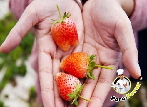 как сажают помидоры в теплице фото